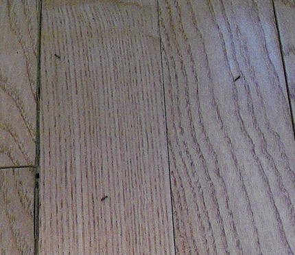 Is The Wood Floor To Blame For This Ant Invasion Wood Floor
