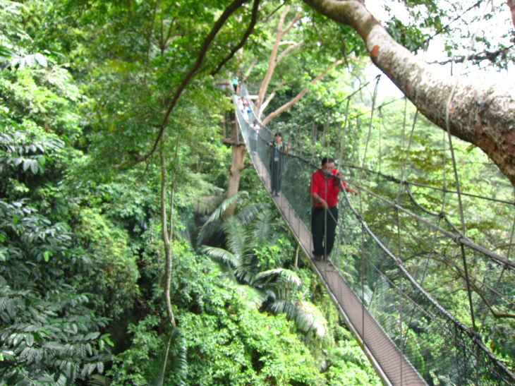 Frim canopy walk Malaysia forest research & VIsit to FRIM: Letu0027s Look at Trees - Wood Floor Business Magazine
