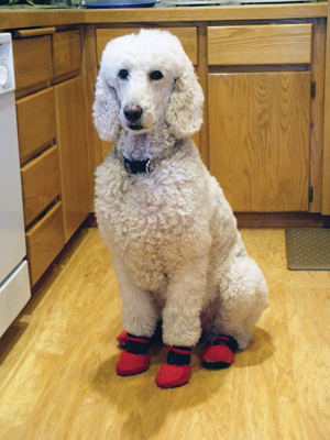 Problematic Pooches For Dog Nails Booties Could Be The Answer