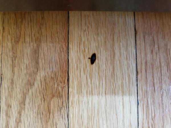Wood Floor Mystery 1 The Spreading