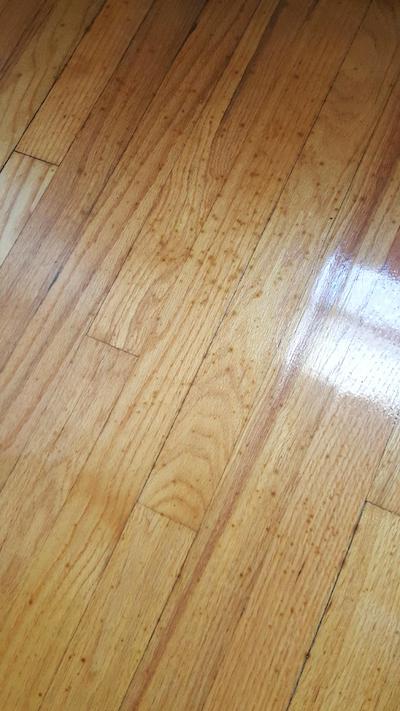 Wood Floor Mystery 1 The Spreading Black Spots Wood